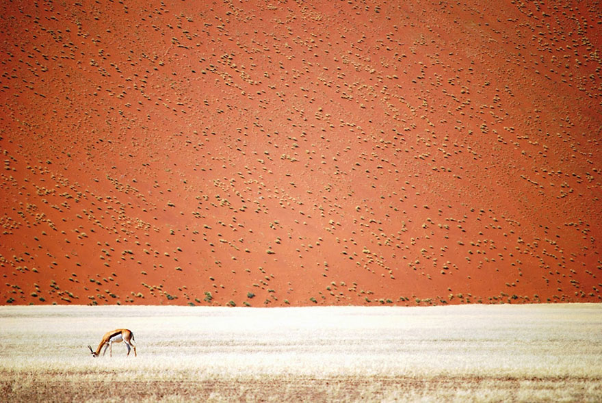 Namibia | Снимка: Doris Landertinger / National Geographic