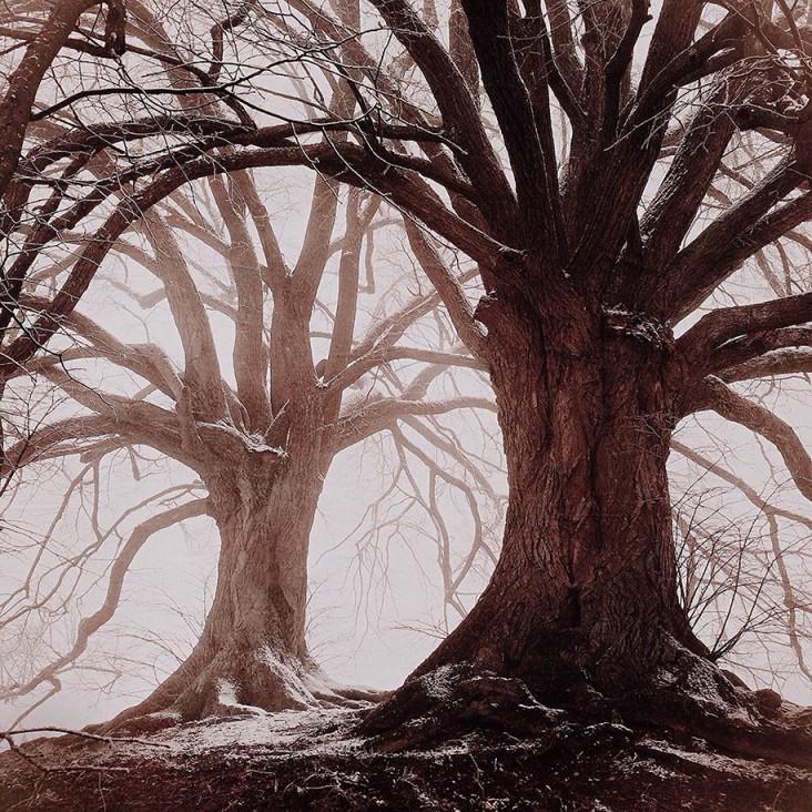 MARIKO KLUG, 3 място - Дървета