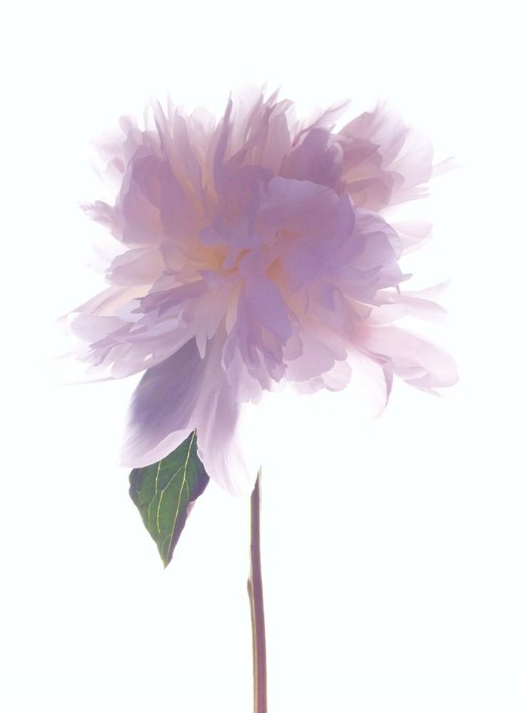 MONICA GANTER, 3 място - Цветя