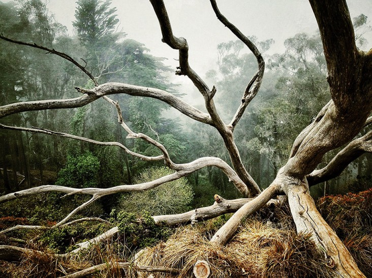 AARON PIKE, 1 място - Дървета
