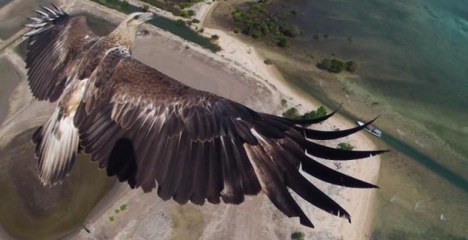 дрони орел