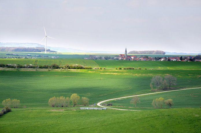 зелено поле